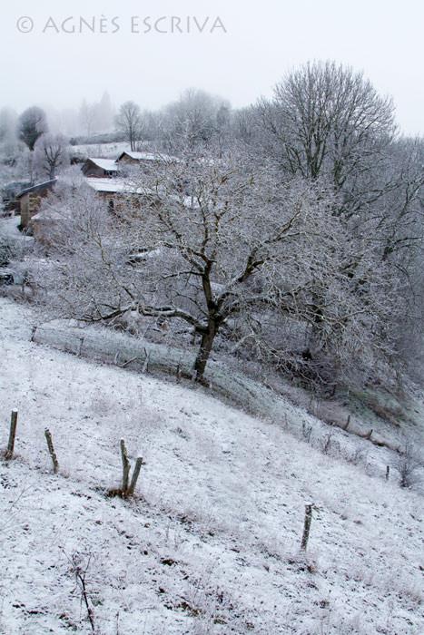 L'arbre penché fin 2009