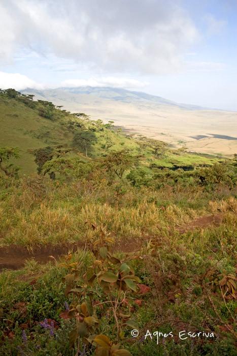 Descente du Ngorongoro vers le parc du Serengeti