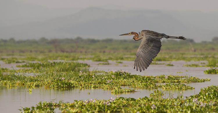 Baringo - Kenya été 2016
