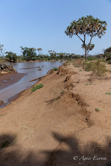 La rivière Ewaso Ngiro