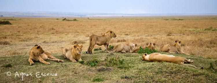Sous-groupe de la bande des 9 (5 mâles et 4 femelles) avec Bibi.