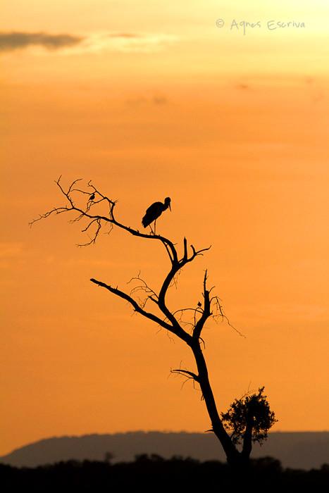 Silhouette de cigogne