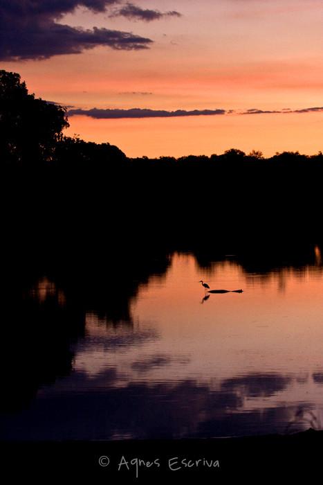 La rivière Luangwa au coucher du soleil 2