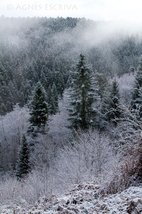 Neige et forêt fin 2009