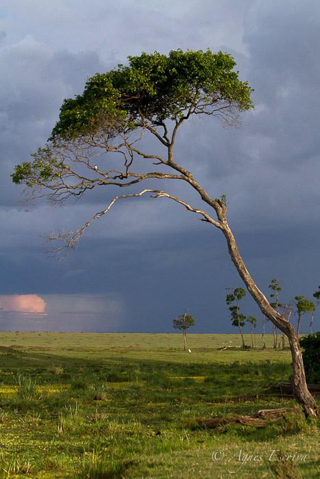 "Le marais (Lieu-dit ""Nakuru"")"