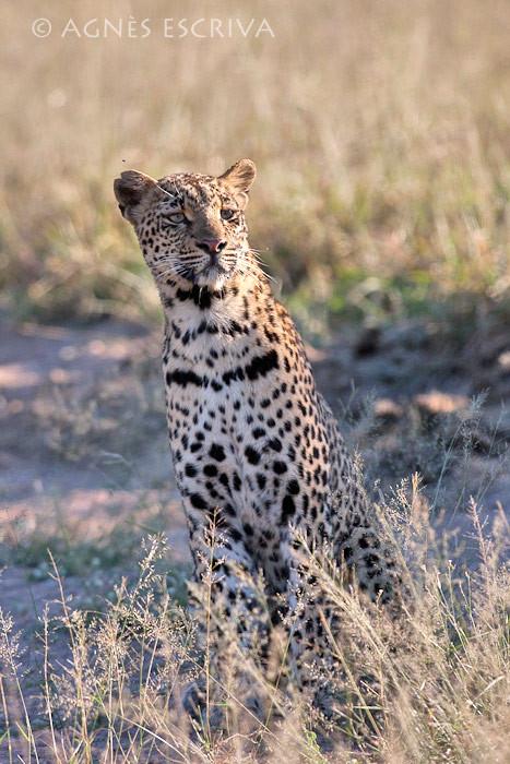 Shadow fille de Karula, soeur de Thandi, née en 2007  (mai 2010)