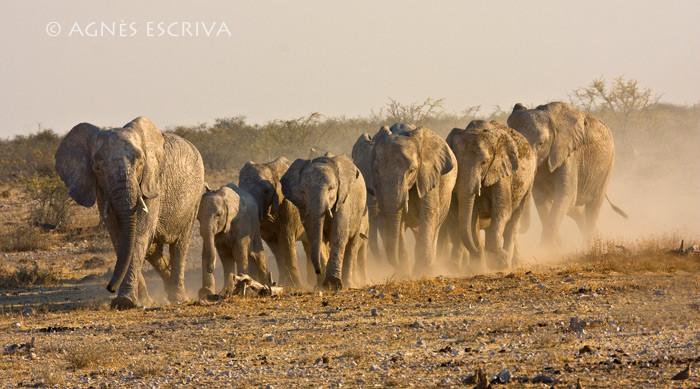 Namibie - 2008