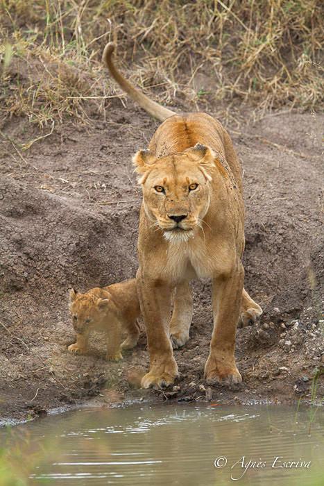 Bibi et son petit