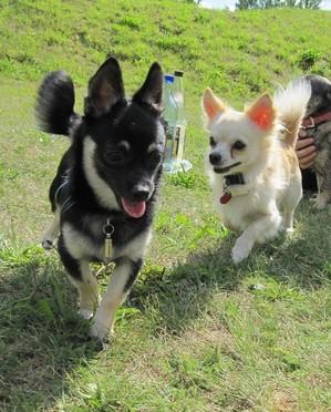 Biju heißt nun Herbert und lebt mit seiner Schwester Eva zusammen