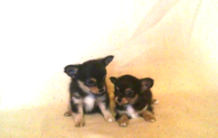 Wishu & Wiwi