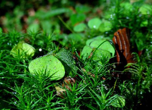 Im grünen Bereich - Moos und Sauerklee
