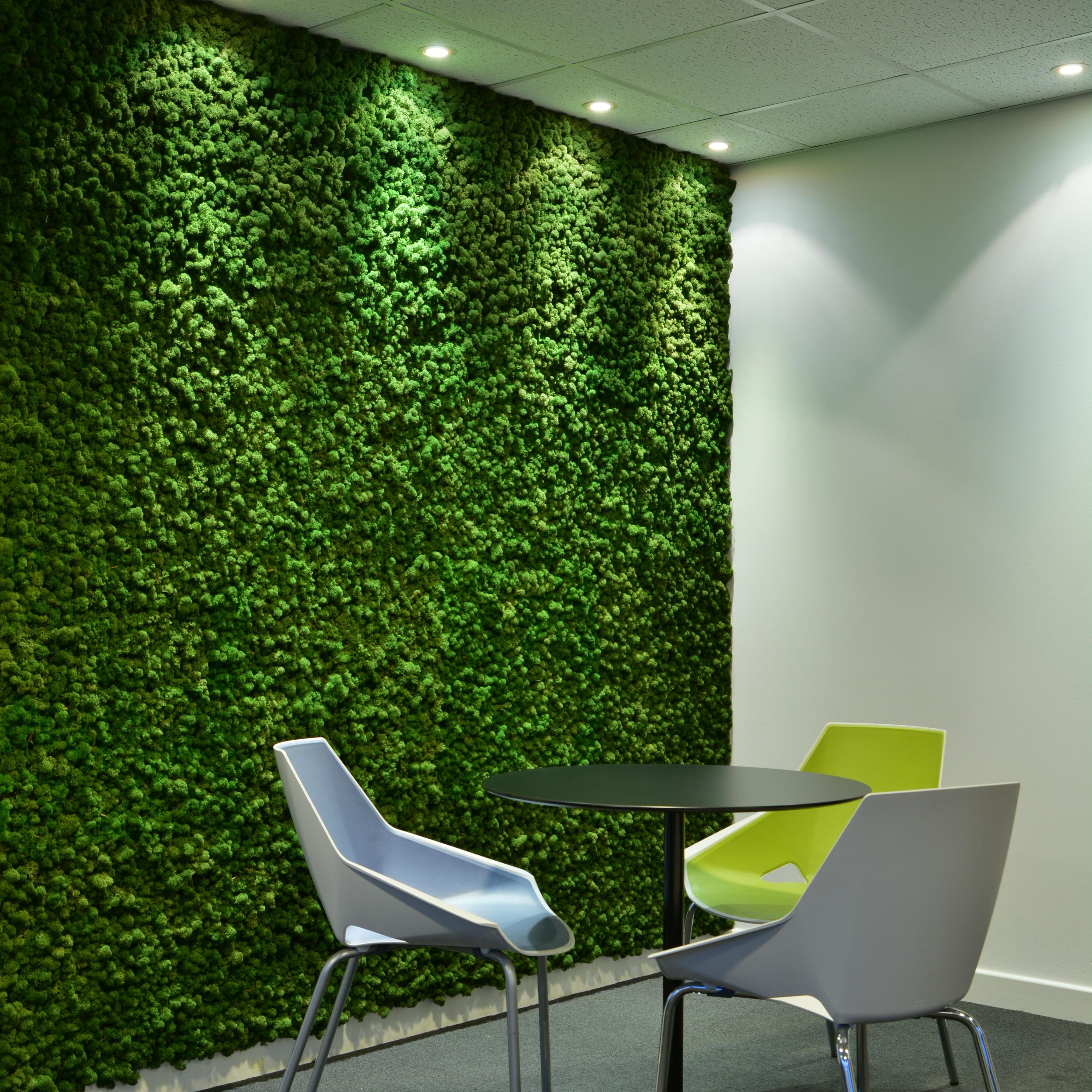 pared de musgo preservado cubre toda la pared y alreadedor de las puertas