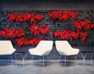 Jardín vertical con poinsettias.  Un ejemplo de jardín vertical con elementos y flores que puede cambiar con la temporada.