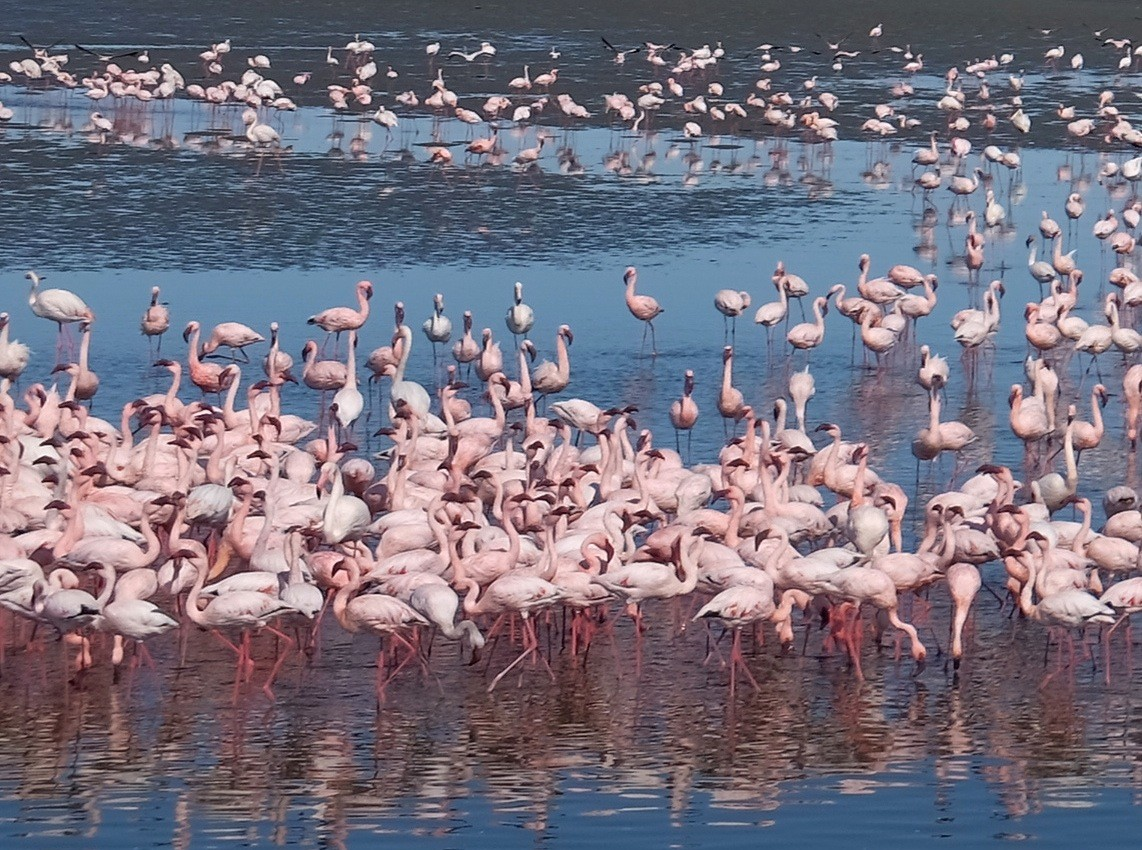 Flamingo Point Walvis Bay Namibia