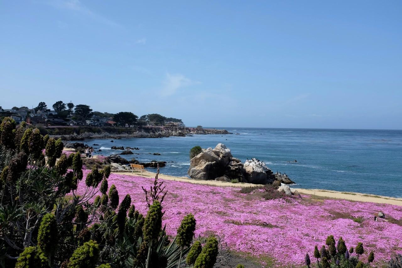 Blütezeit Pacific Grove, Monterey Peninsula