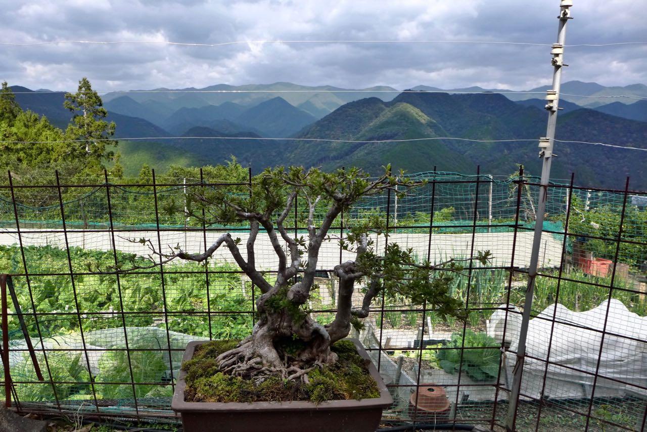 Gemüsegärten der Bergweiler auf dem Kumano Kodo