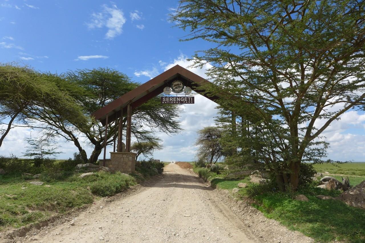Wilkommen in der Serengeti