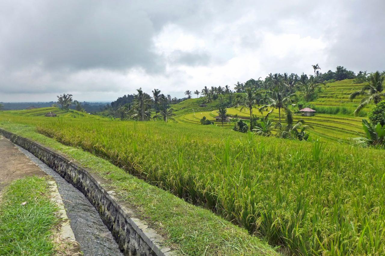 Jatiluwih Balis größte Reisterrassen