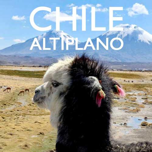 Reisebericht Chile Hochland Altiplano Reiseblog Edeltrips