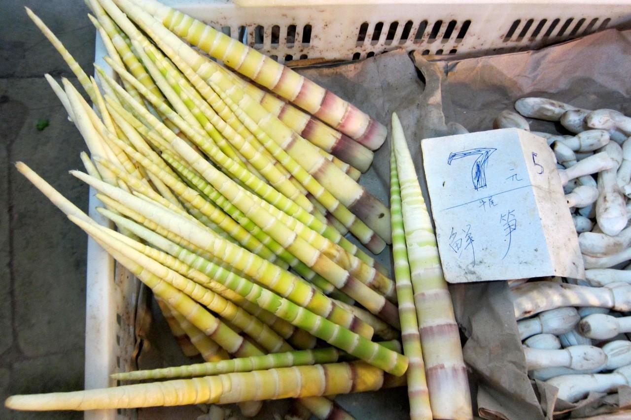 Junger Bambus, Frischmarkt Chengdu