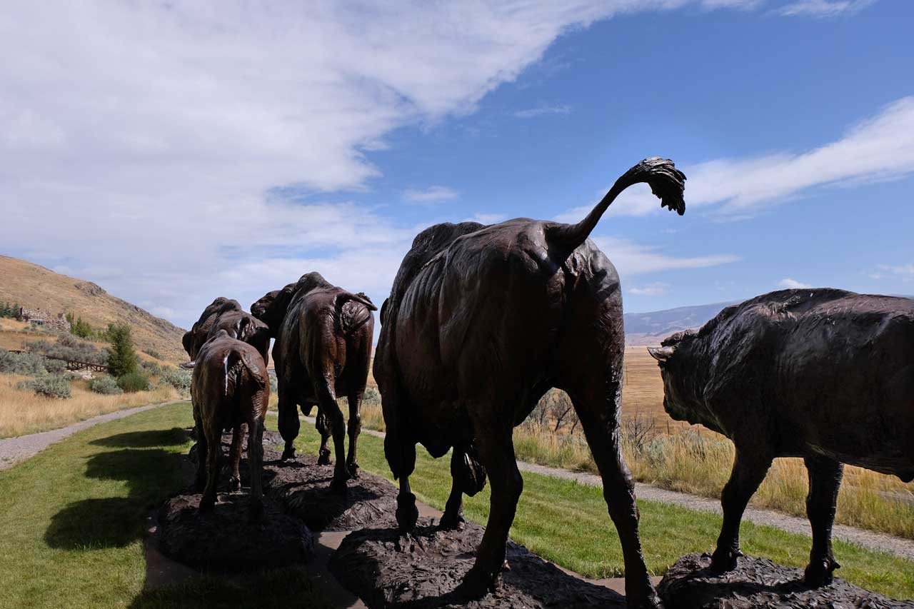 'Buffalo Trail' National Museum of Wildlife Art