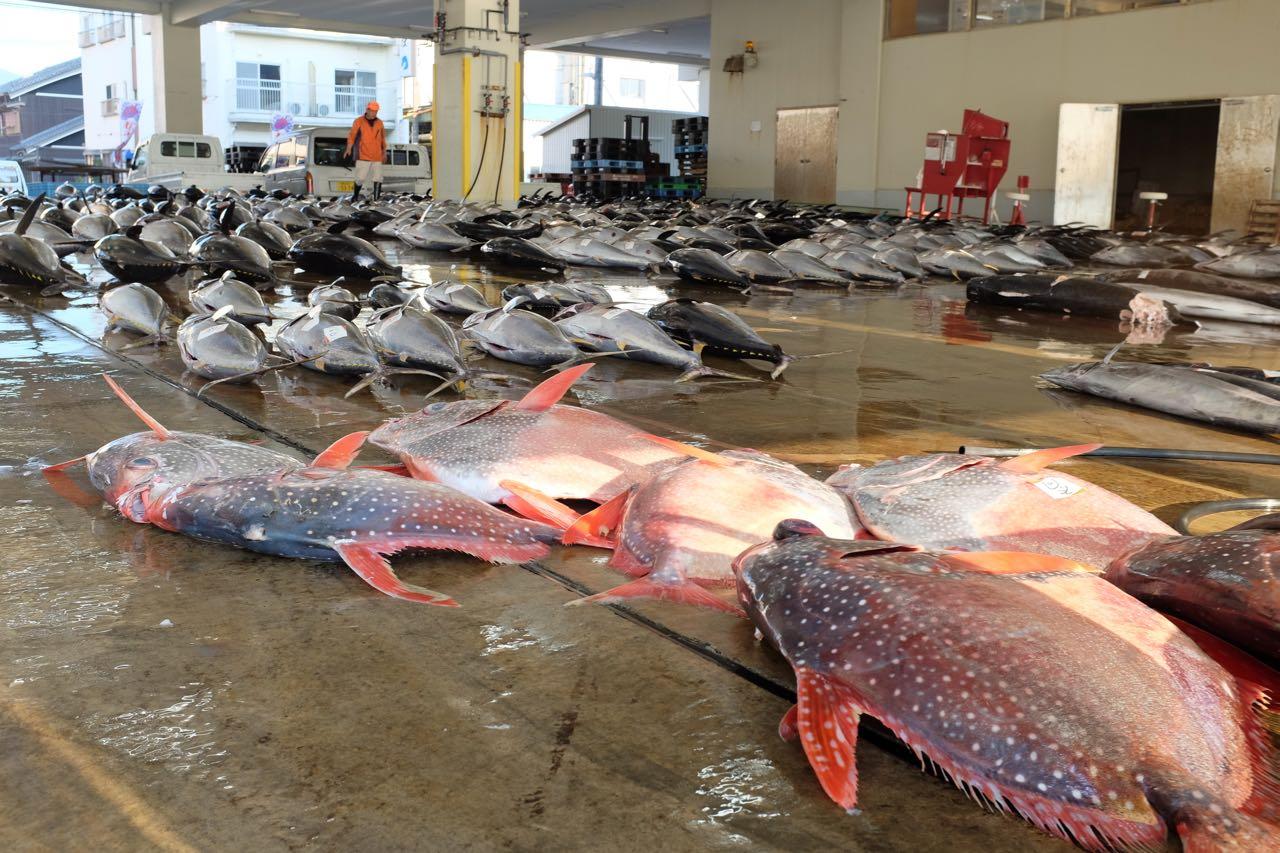 Großfische, Auktion in Katsuura