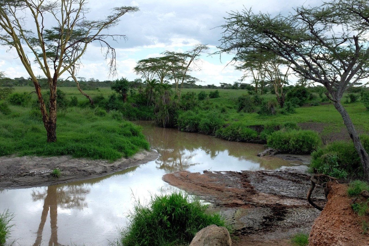 Flusslandschaft in der Central Serengeti