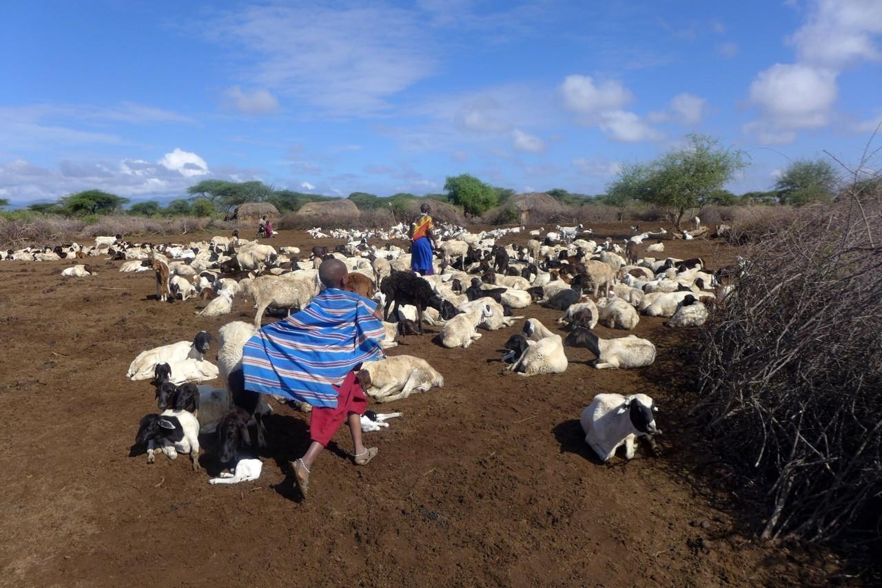 Tansania Massai Dorf