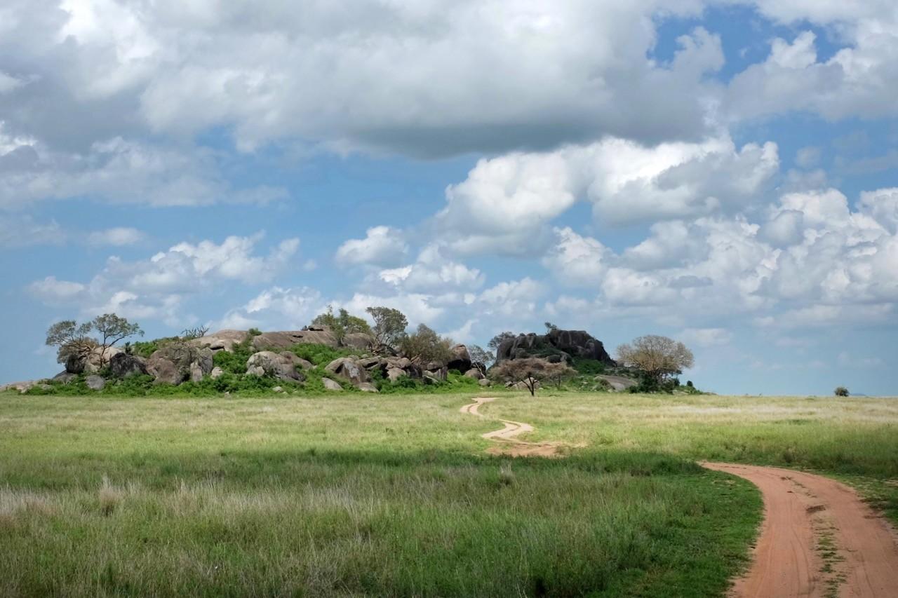 Bei den Felsformationen in der Serengeti Ausschau halten nach Raubtieren