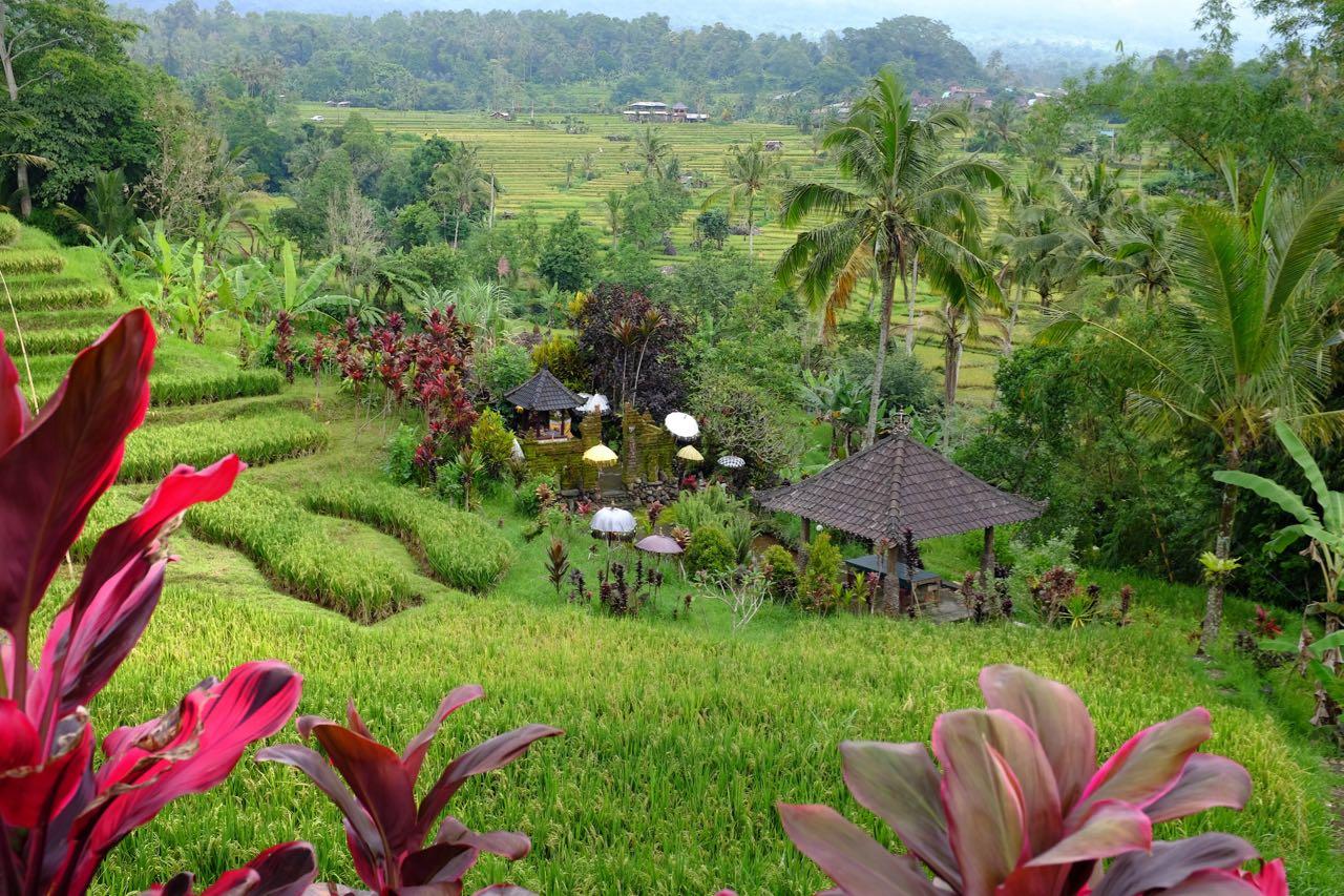 Wandern durch die Jatiluwih Reisterrassen