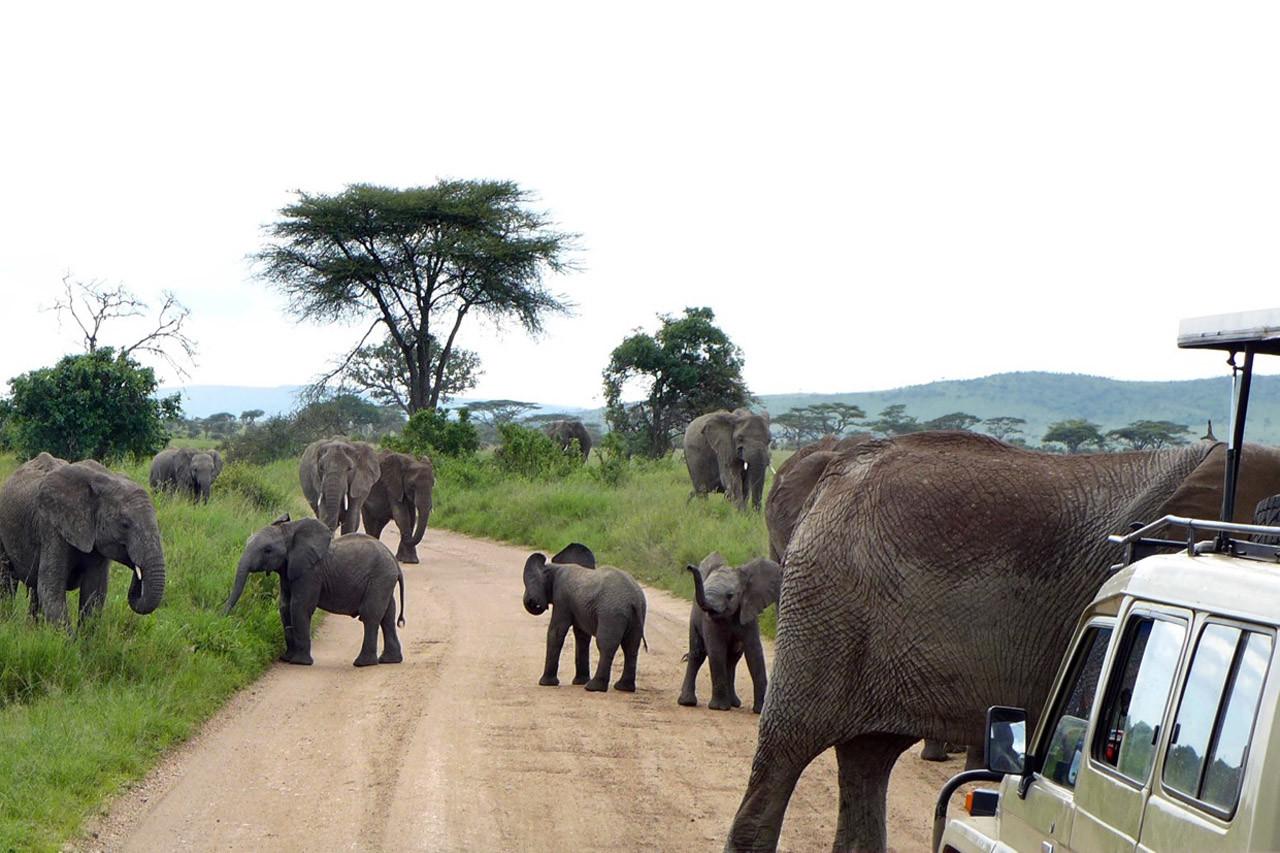 Abendverkehr in der Serengeti auf dem Weg zurück ins Camp