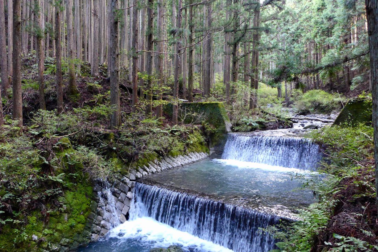 Durch üppige grüne Wälder auf Japans Kumano Kodo Pilgerweg