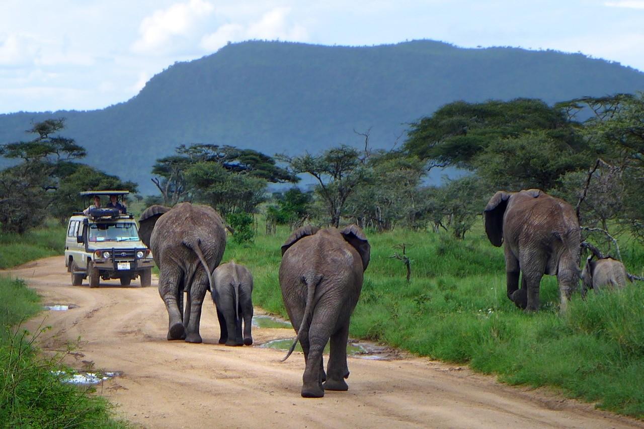 Elefantenherde Serengeti, Tansania