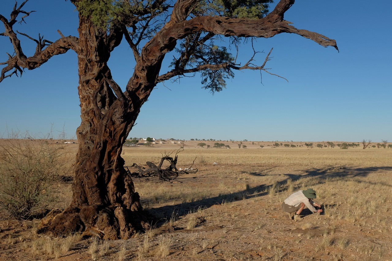 Tsondab Valley Kameldorntal Namibia