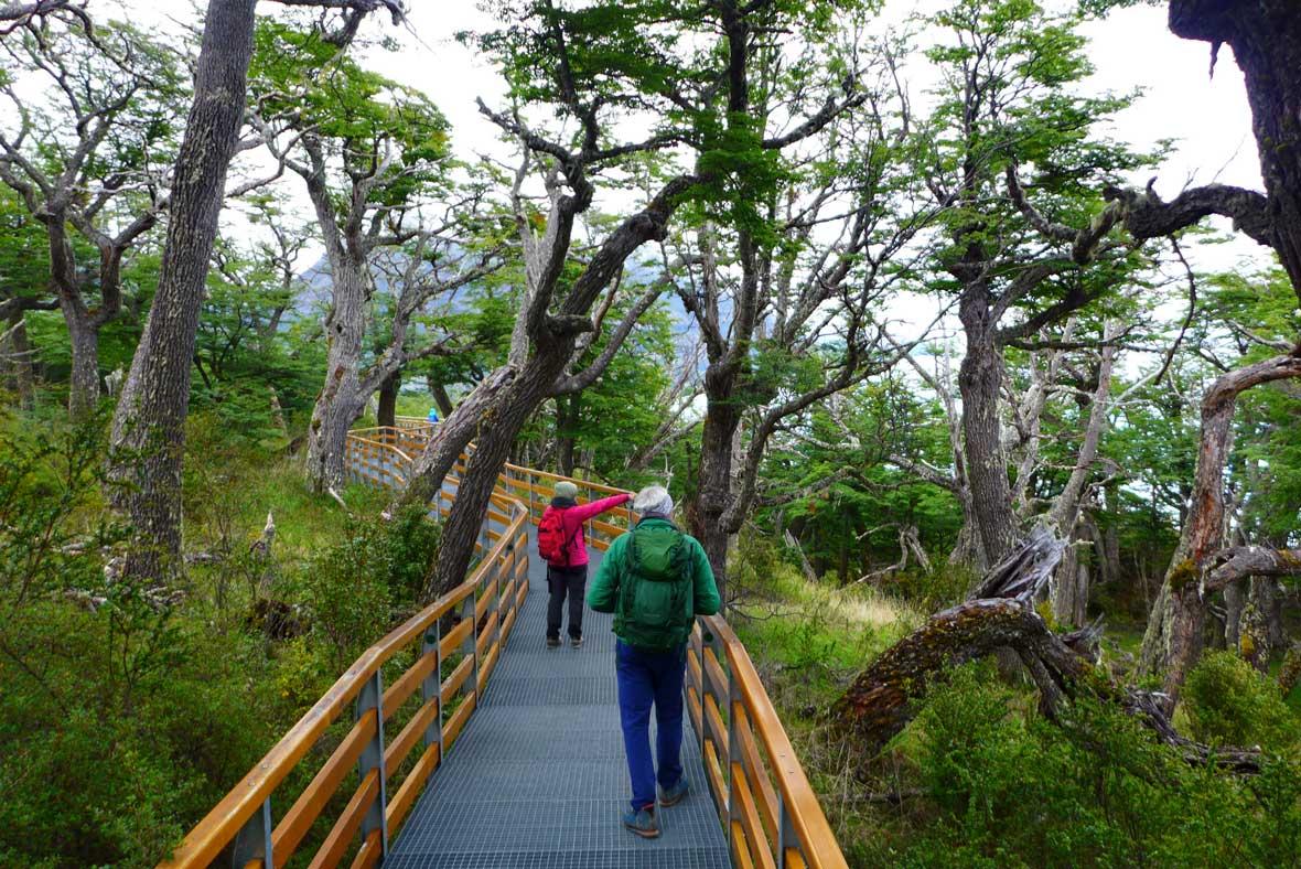 Weg durch den Lenga-Wald
