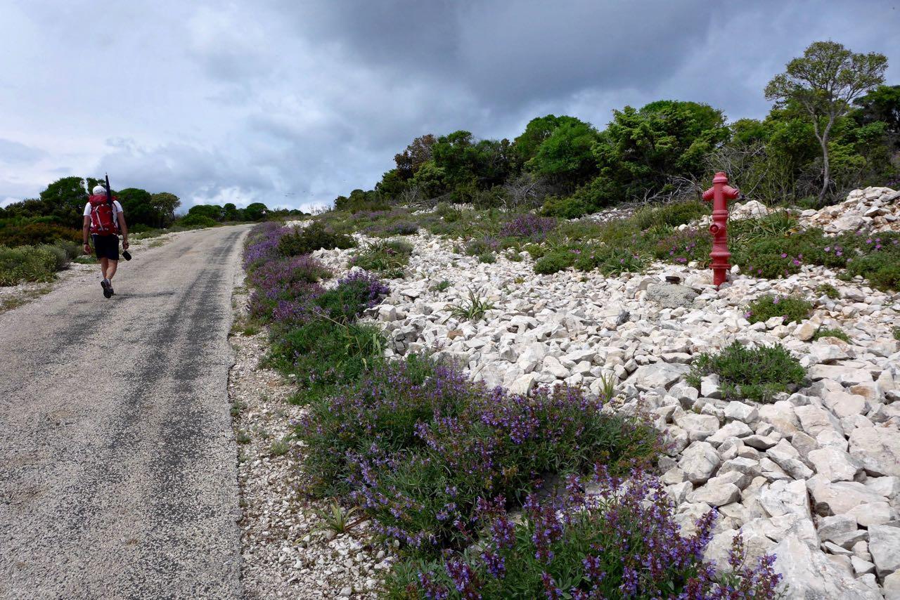 Überall blüht der Salbei im Mai