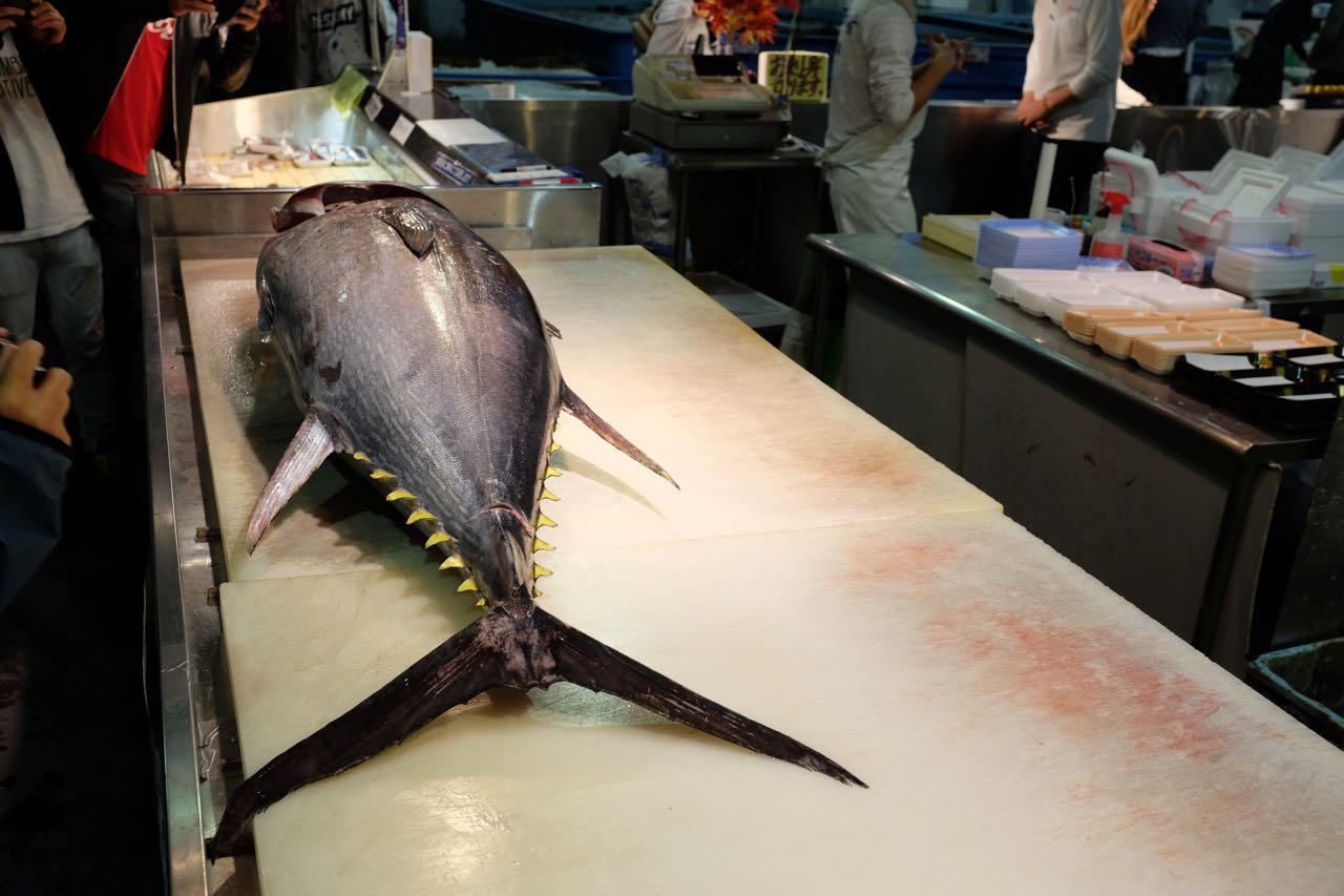Der Yellowfin Tuna liegt bereit