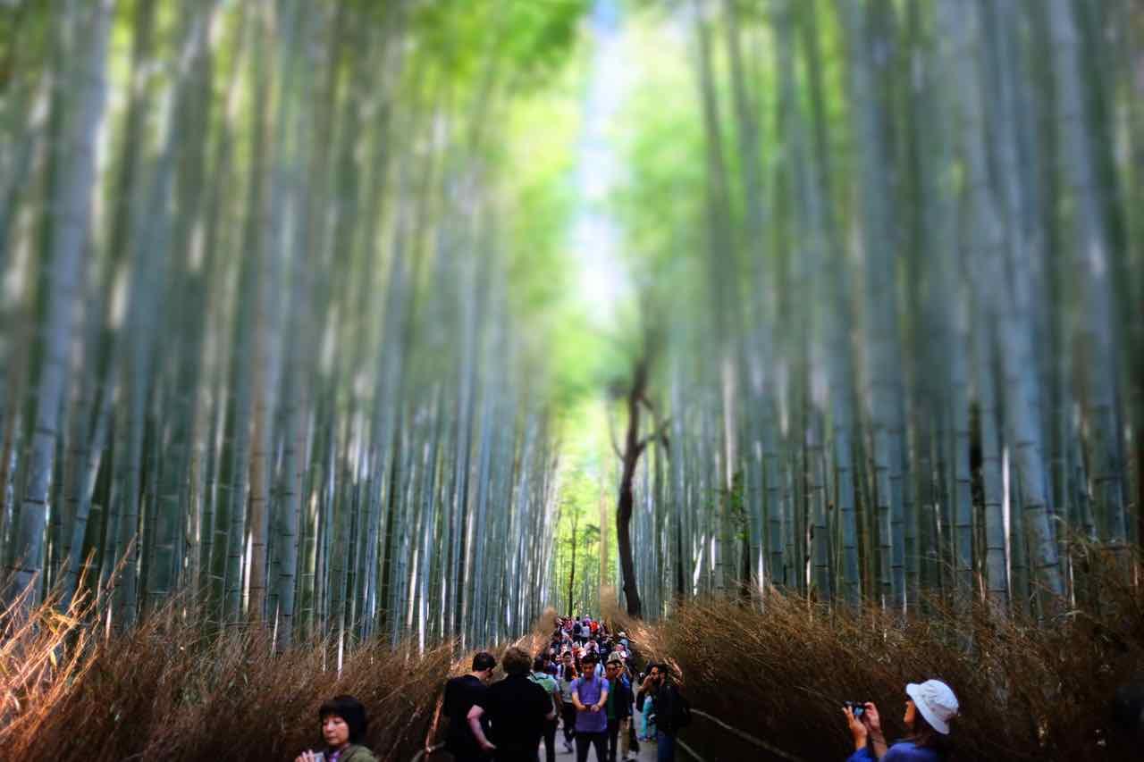 Im Sagano Bambuswald von Arashiyama