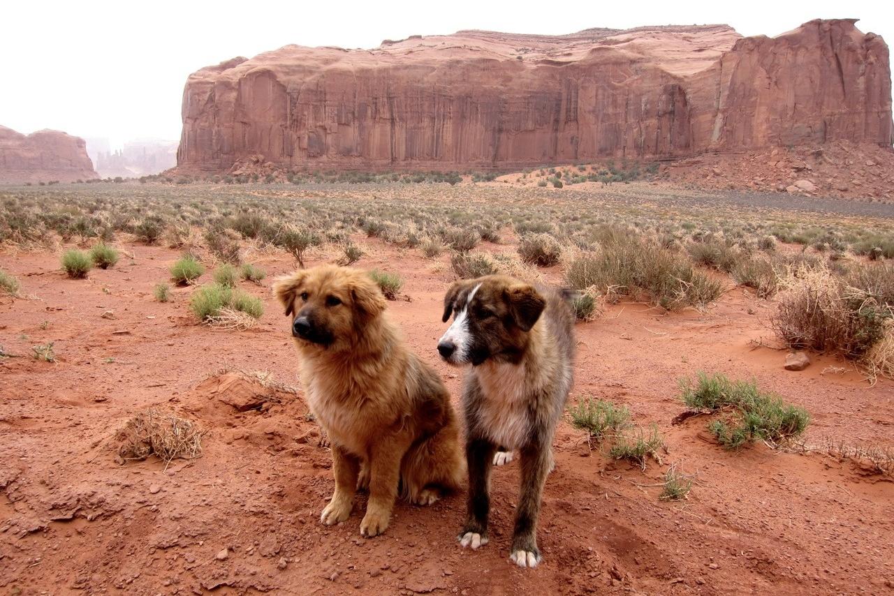 Hundewetter am Monument Valley