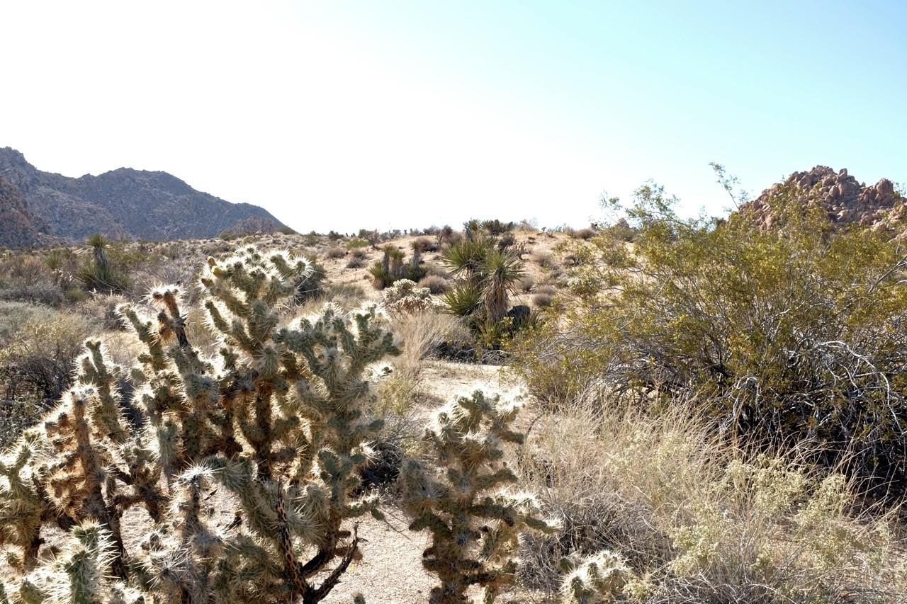 Wüstenflora, Joshua Tree NP