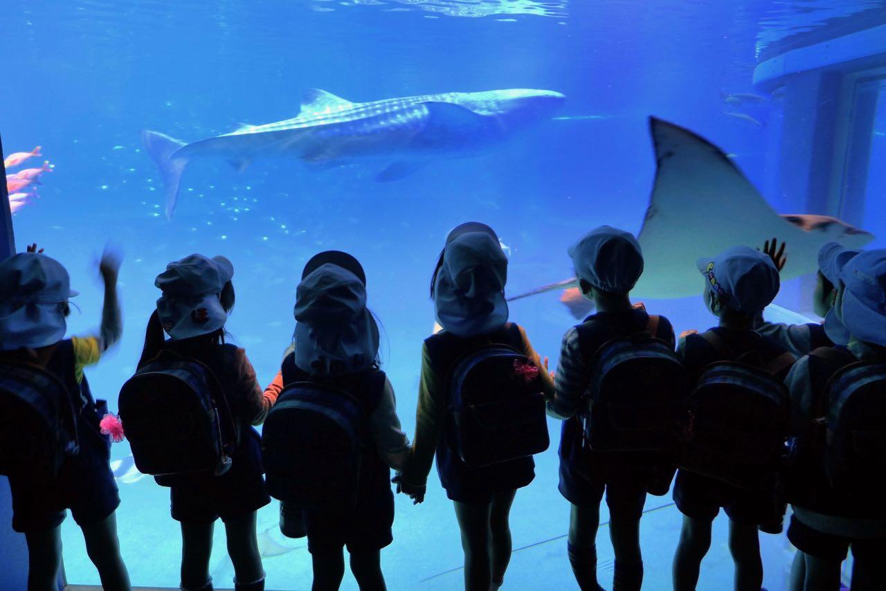 Warten auf den Walhai im Osaka Aquarium