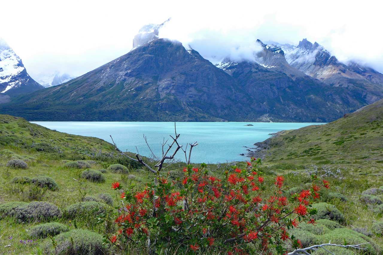Am Mirador Cuernos am Lago Nordenskjöld, Torres del Paine