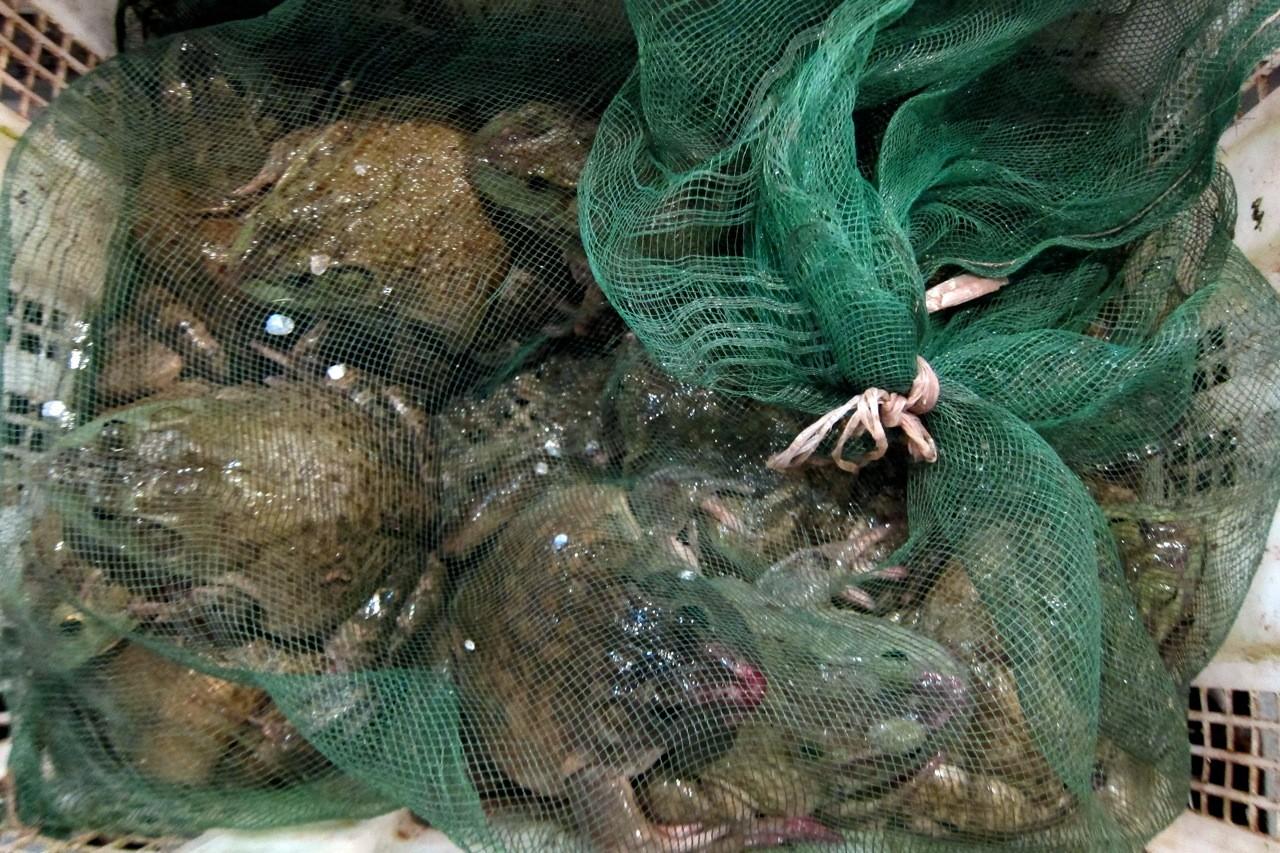 Dicke Kröten fürs Menü, Frischmarkt Chengdu