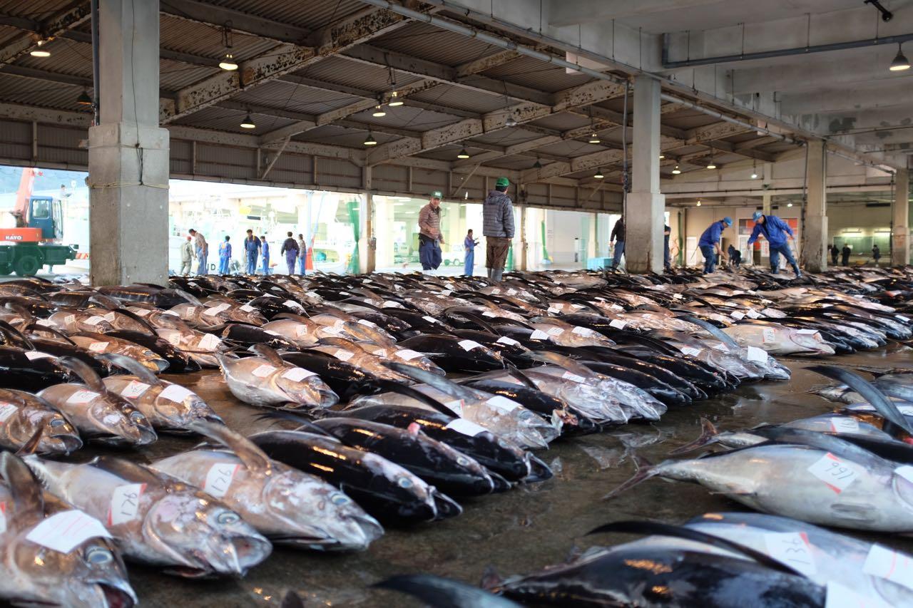 Die Fischhalle in Katsuura hat sich bis 7 Uhr gefüllt