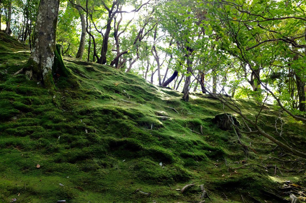 Moosgarten im Ginkaku-ji-Tempel Silberner Pavillon