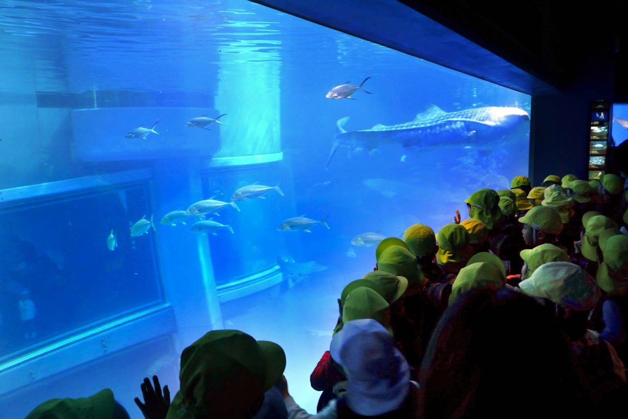 Kindergarten Ausflug ins Osaka Aquarium Kaiyukan