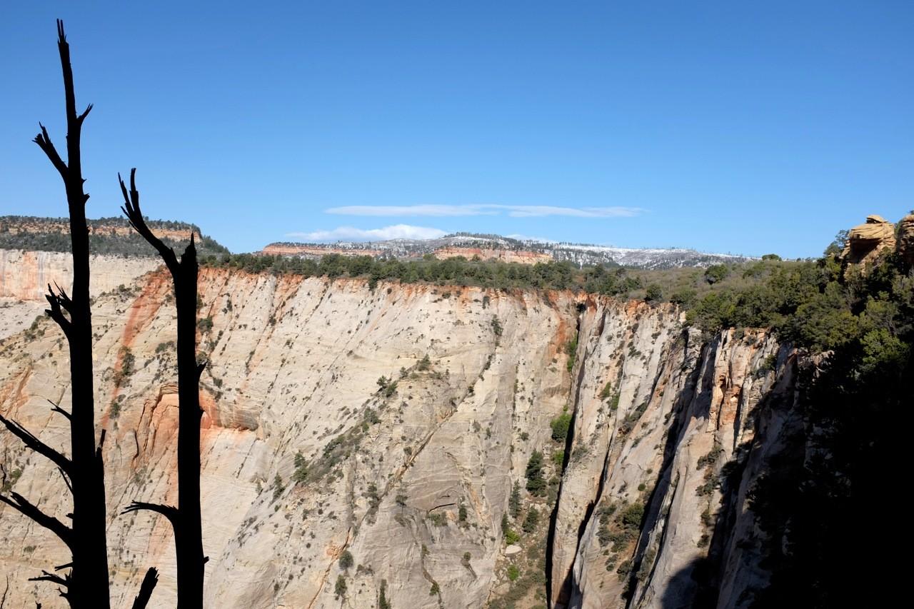 White Cliffs vom Observation Point Trail, Zion NP