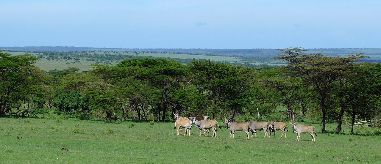Wildreiche Serengeti Tansania