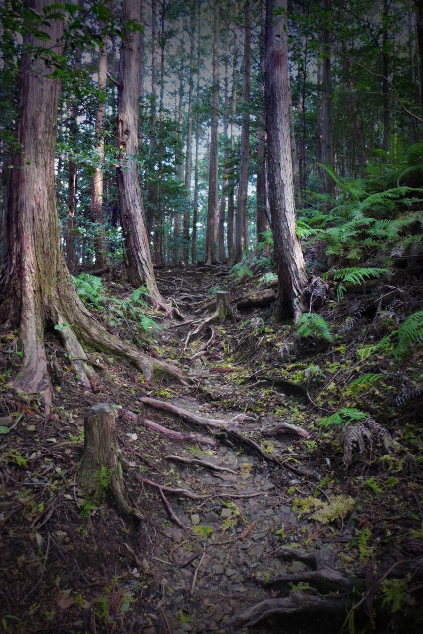 Schöner Pilgerweg Kumano Kodo Japan