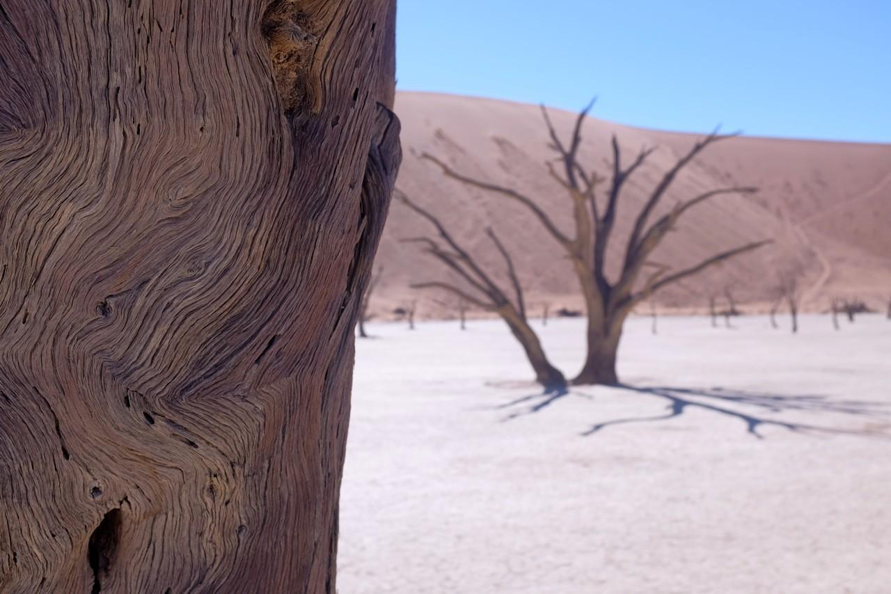 Kameldornbäume Dead Vlei Sossusvlei, Namibia